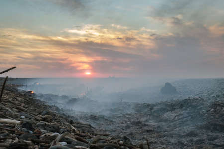 Coast with smoke after wildfire. Burnt wood on the shore at sunset Foto de archivo