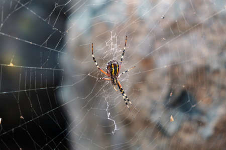 Spider is waiting for his victim Banque d'images - 159029149
