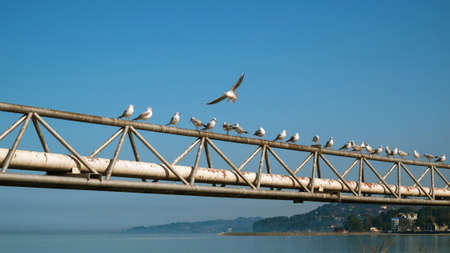 Seagulls on the rusty metal construction with coastline and blue sky background
