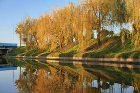 Autumn landscape scene - colorful willow trees reflecting on the river at the park lit by sunlight. Banque d'images