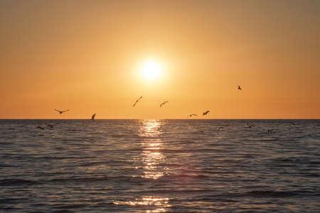 Seagulls flying above the sea, bright sun water and horizon at sunset 版權商用圖片