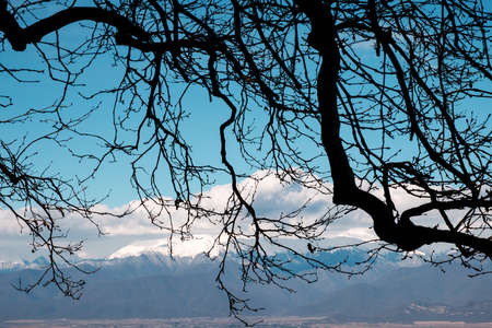 Tree branches with beautiful mountains and sky background