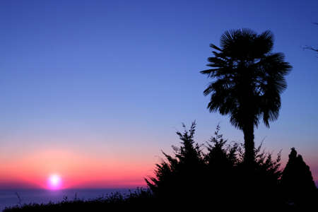 Silhouettes of the palm tree and plants on the coast at colorful sunset