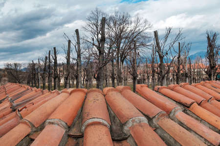 View of leafless peach trees behind  roofing tiles covering house building roof