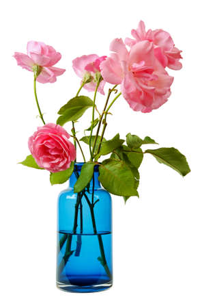 Pink roses in a blue transparent glass vase isolated on a white background