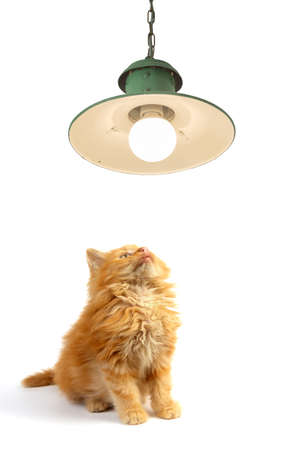 Cute ginger kitten looking at vintage lamp, isolated on white background 版權商用圖片