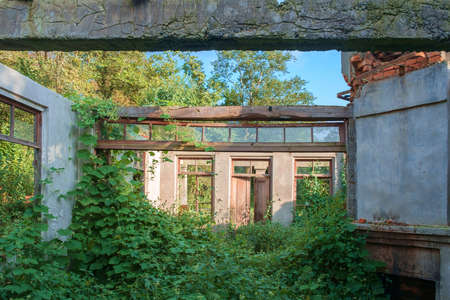 Abandoned wrecked house with empty windows overgrown with green ivy and plants Standard-Bild