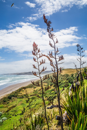 new zealand flax: Summer New Zealand beach top-view with native flax