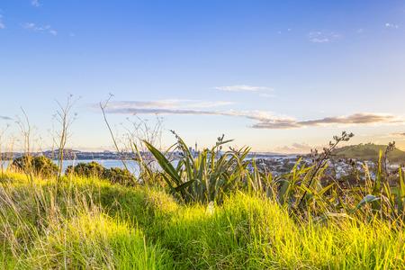 Sunset Auckland city skyline through the grass