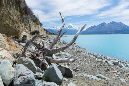 View on a distant snowcapped peak through the branches of a dead tree