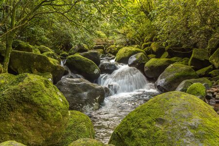 Water cascade on mossy rocks in the forest