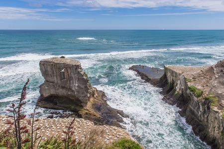 Colony of nesting seabirds on rocks in a stormy sea