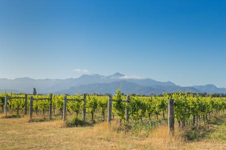 marlborough: Sunset vineyard view against the distant mountains Stock Photo