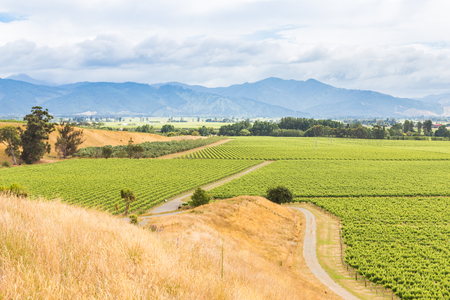 View from a hill over vineyards in Marlborough region, the South Island of New Zealand
