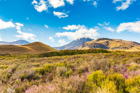 Flowering alpine landscape against the distant peaks