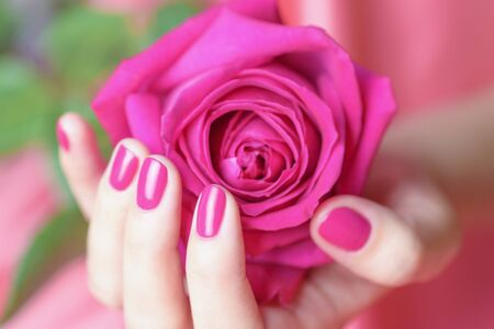 Female hands with pink manicure holding a pink rose