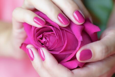 Female hands with pink manicure holding a pink rose Stock Photo
