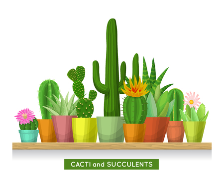 House plants on the shelf. Cacti and succulents concept