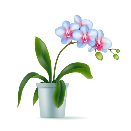 White orchid pot realistic isolated