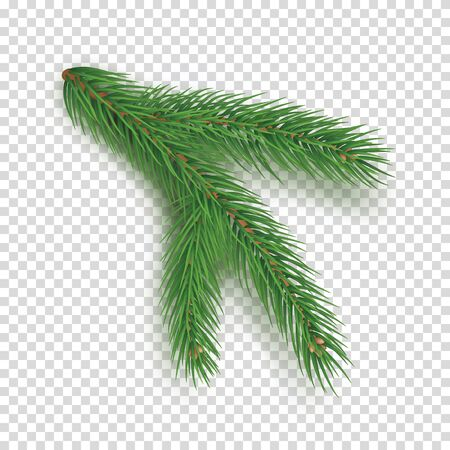 Realistic branch of christmas tree