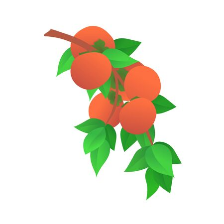 Ripe persimmons with green leaves icon Stock Illustratie