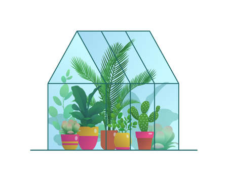 Small home greenhouse with various plants. Glass orangery, winter garden or urban jungles with tropical houseplants in flowerpots flat vector illustration isolated on white background