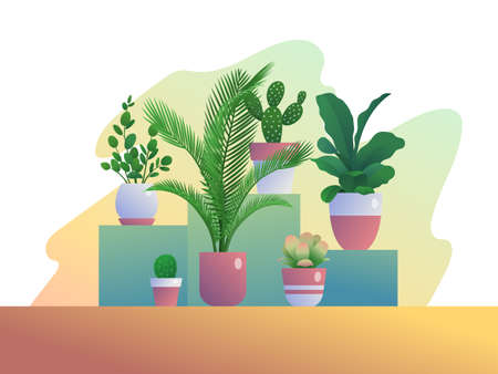 Houseplants growing in pots. Group of tropical potted plants for home organic interior decoration, hobby, urban jungles concept flat vector illustration