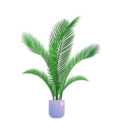 Palm houseplant in flowerpot. Indoor exotic tropical plant for organic home or office interior decoration botanical design flat vector illustration isolated on white background Archivio Fotografico - 154585844