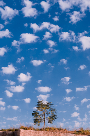 A small tree against a blue sky with white clouds
