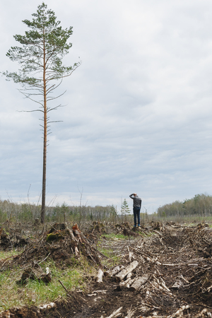 arbol de problemas: A lone man among the felled forest looking at one tree remaining. Deforestation. Environmental change. The problem of mankind. One tall tree