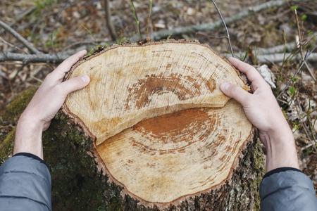 arbol de problemas: Manos masculinas que abrazan un toc�n de �rbol talado. problema ambiental, la deforestaci�n. Foto de archivo