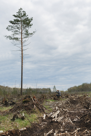 saddened: A lone man among the felled forest looking at one tree remaining. Deforestation. Environmental change. The problem of mankind. One tall tree