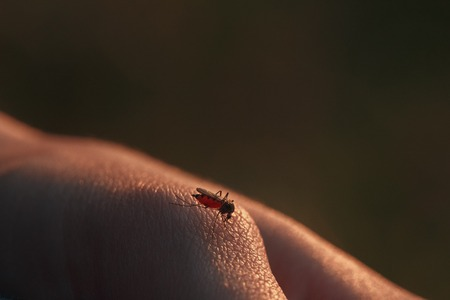 prickling: A mosquito sits on the body and drinking the blood. The carrier of the disease.