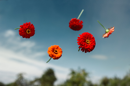 weightlessness: Red flowers thrown to the sky and soar in weightlessness