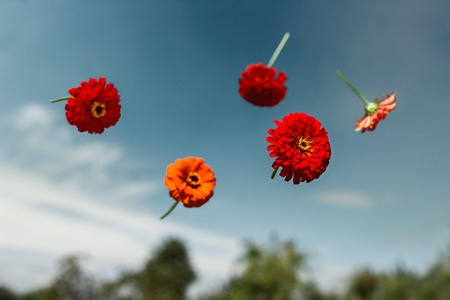 fantasize: Red flowers thrown to the sky and soar in weightlessness