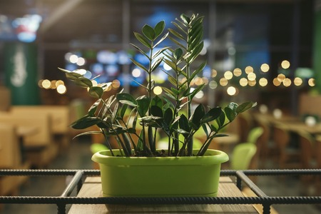 Green pot of flowers is on the shelf in the evening in the pub Stock Photo