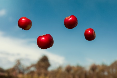 airiness: ripe apples in zero gravity thrown in the air. Autumn ripe apples, floating in zero gravity. Ripe fruits with vitamins. Stock Photo