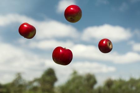 gravedad: manzanas maduras en gravedad cero lanzados en el aire. Otoño manzanas maduras, flotando en gravedad cero. Las frutas maduras con vitaminas.