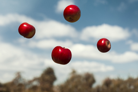ripe apples in zero gravity thrown in the air. Autumn ripe apples, floating in zero gravity. Ripe fruits with vitamins. Stock Photo