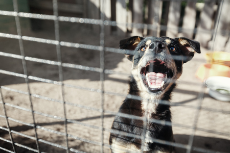 Homeless dog behind bars in cage begging for hosts