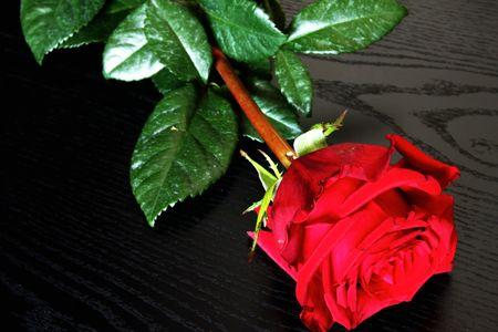 Isolated beautiful red rose on black background photo