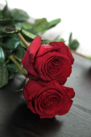 Isolated beautiful red roses on black background photo