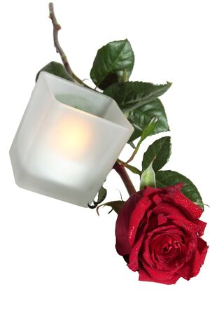 Beautiful rose and candle on white background photo