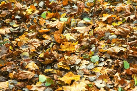 Autumn leaves on the ground background photo