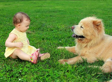Beautiful fun baby girl looking on big dog sitting on green grass outdoor and smiling photo