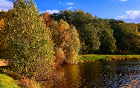 Beautiful autumn forest trees on shore of lake under blue sky  Nature russian autumn landscape  photo