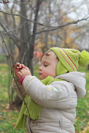 Baby picking ash berry on branch with serious face outdoors nature background  Beautiful natural portrait Stock Photo - 15971255