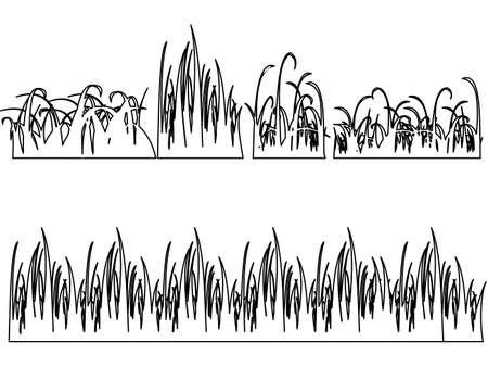 Set of Black Grass Silhouettes on White Background. illustration