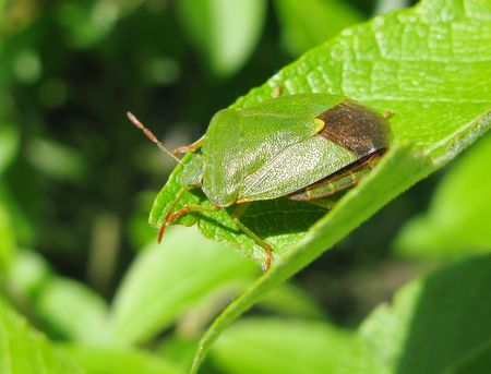 green bug sitting on the leaf Stock Photo - 6424380