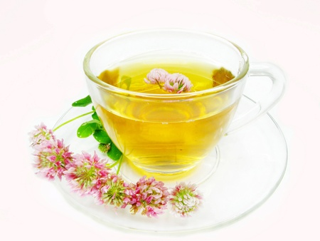 herbal tea with pink clover flowers in cup photo